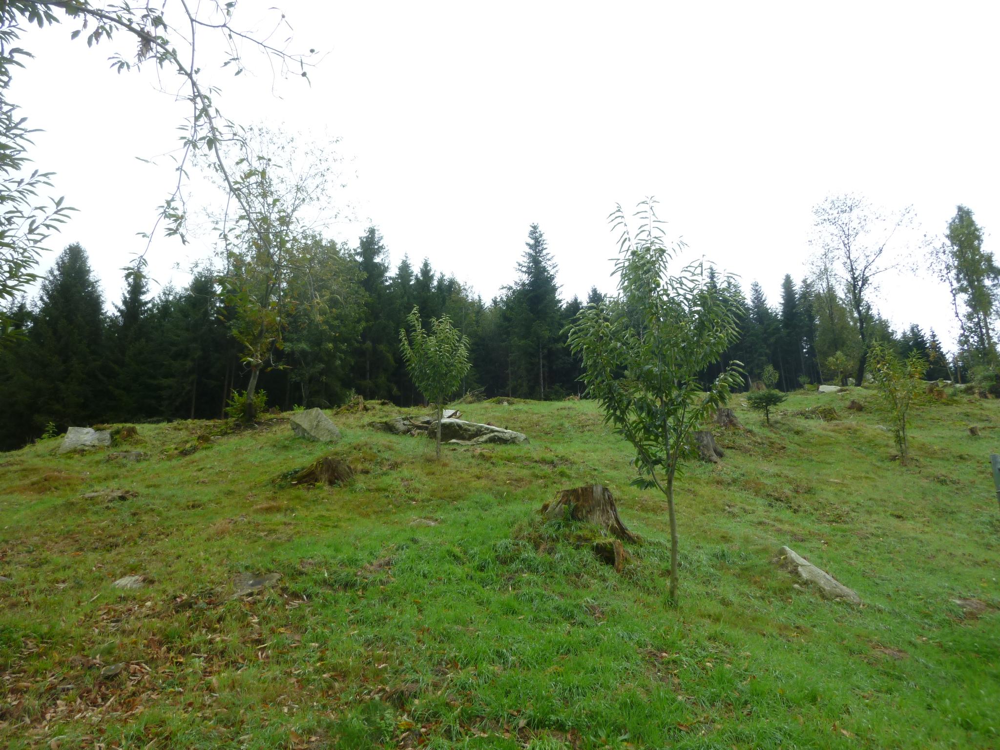 P1090375 chilenwald bv