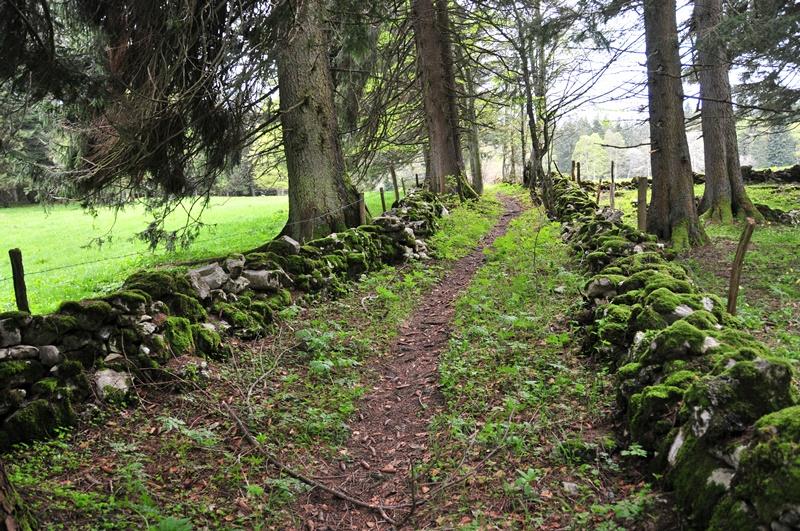 Beidseitig von Trockenmauern gesäumte Viehtriebwege - hier noch in sanierungsbedürftigem Zustand